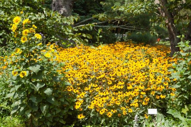 Wildflowers in the arboretum