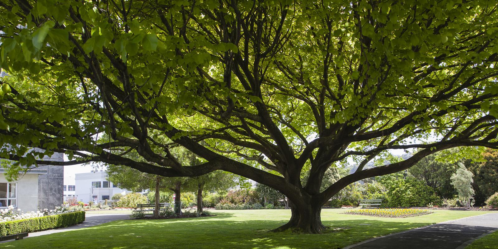 Go See Trees | City of Lexington