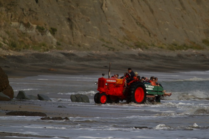 Tractor ride out to the gannet colony travels carefully around rocky outcrops