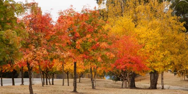 Ornamental grove in Wanaka