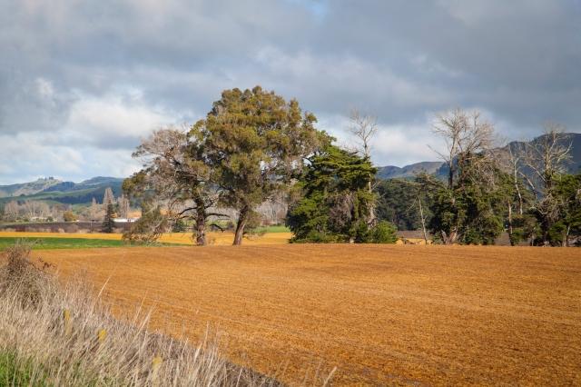 Hawkes Bay landscape near Otane