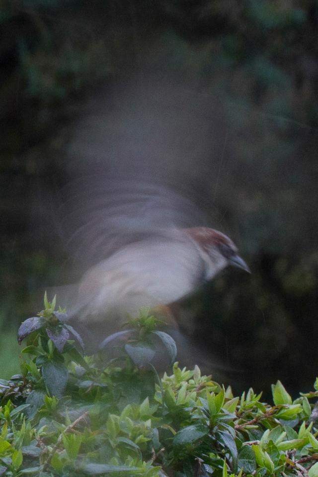 Sparrow aerobics