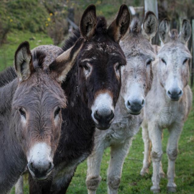 Donkeys in Moonshine Valley