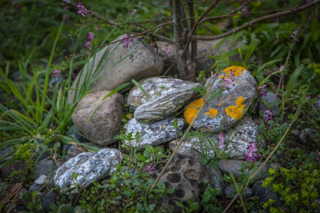 Weeds and rocks