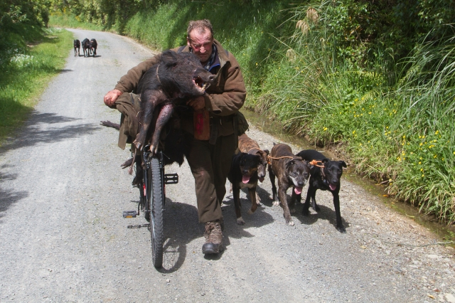Pig hunter with his catch and his two packs of dogs