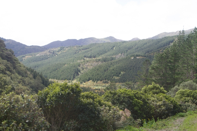 The Rimutaka ranges