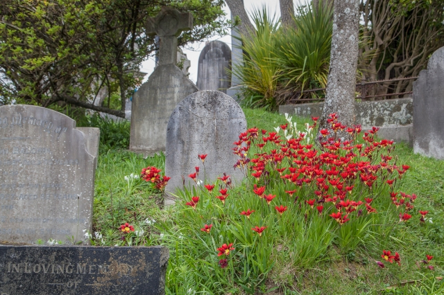 Wild flowers in the cemetery