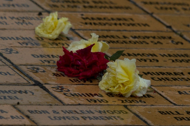 Roses on the memorial