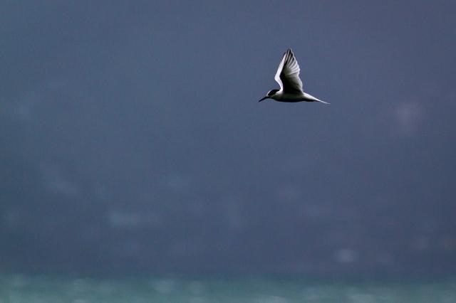 elegant in flight
