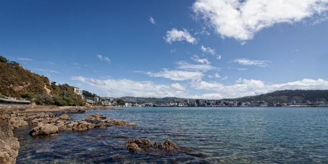 Wellington City from Pt Jerningham