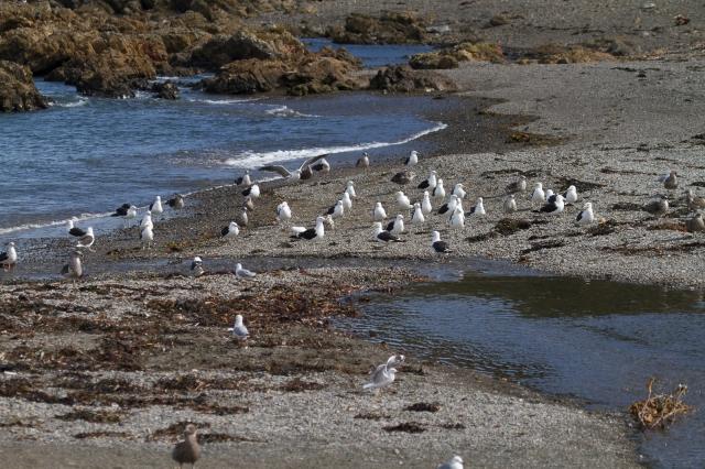 A few gulls stayed