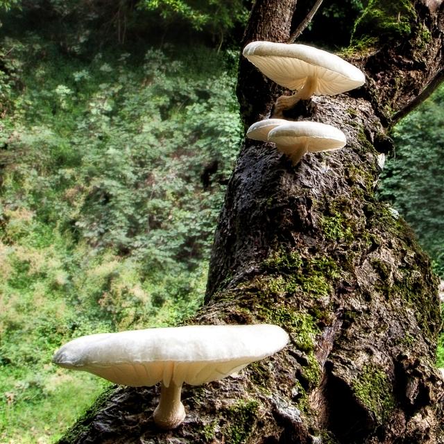 More fungus