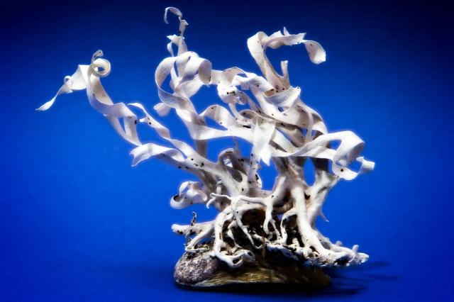 Sea-weed