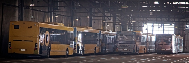Wellington buses