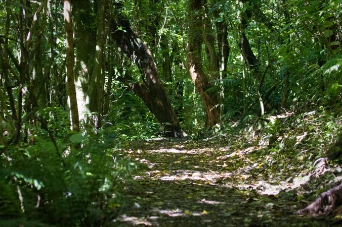 Bush trail