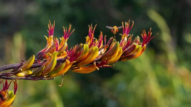 Bee on flax