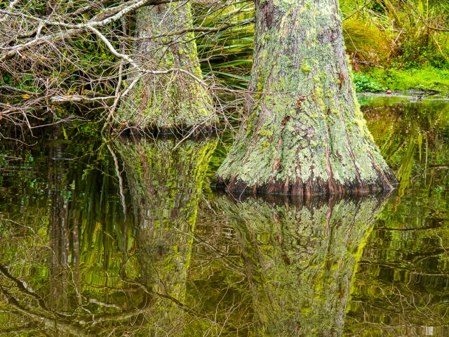 Tree trunks in the pond at Te Haukaretu
