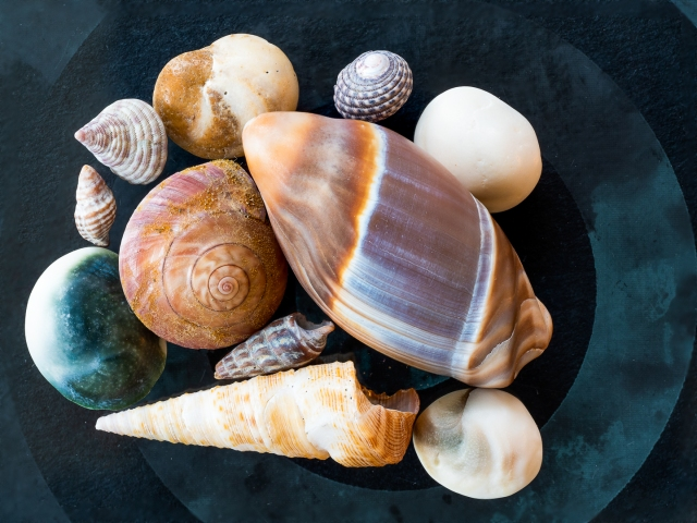 Collected sea shells