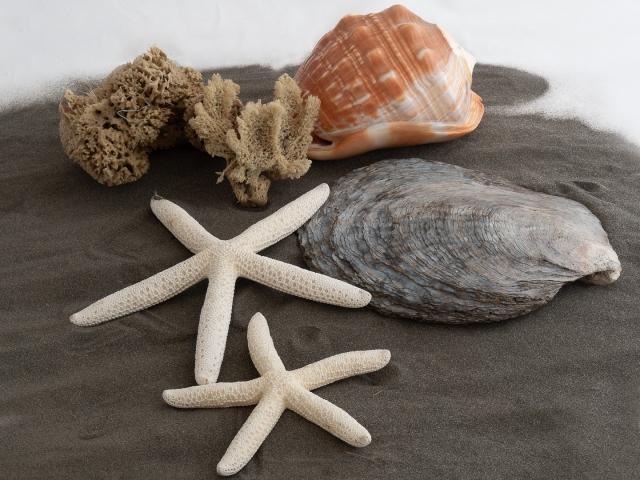 Beach souvenirs